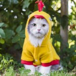 kittenchicken